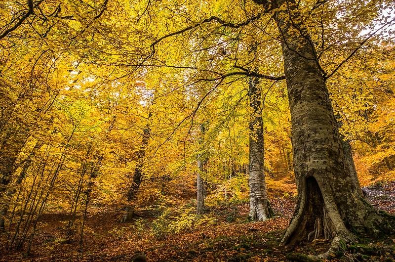 13 consejos para mejorar tus fotografías de paisaje