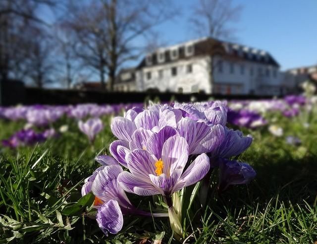 Fotos de flores a nivel del suelo