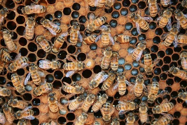 10 fotos de insectos para inspirarte