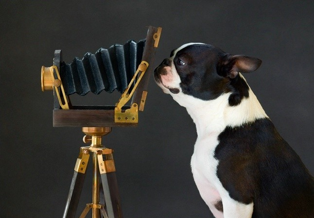 Funny Animals With Cameras_6