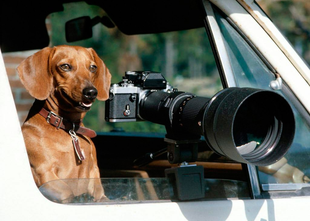 Smile-Youre-on-Canine-Camera