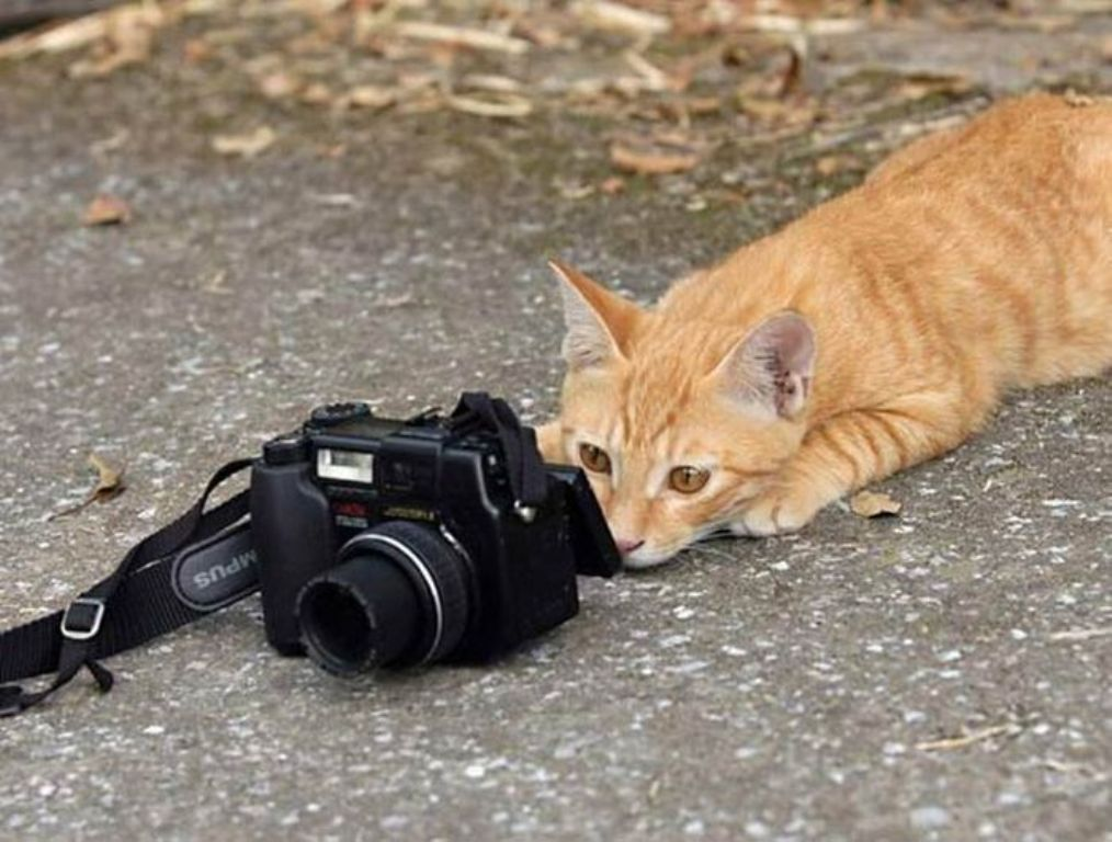 animal_camera07_m