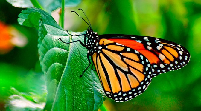 10 fotos de insectos para inspirarte foto24 - Insectos en casa fotos ...