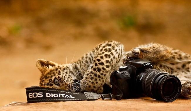 camera-and-animal