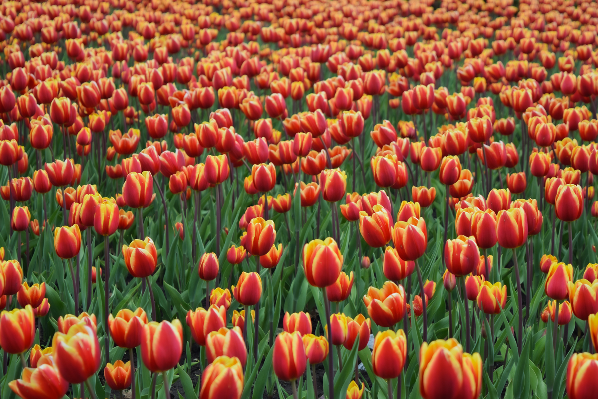 20 photos de fleurs