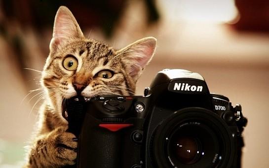 cats_bite_funny_cameras_nikon_kittens_photo_camera_biting-t2