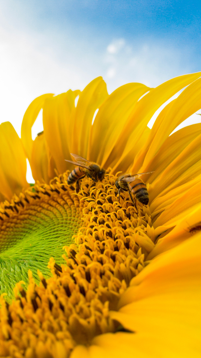 Photos de fleurs avec des insectes ou des animaux