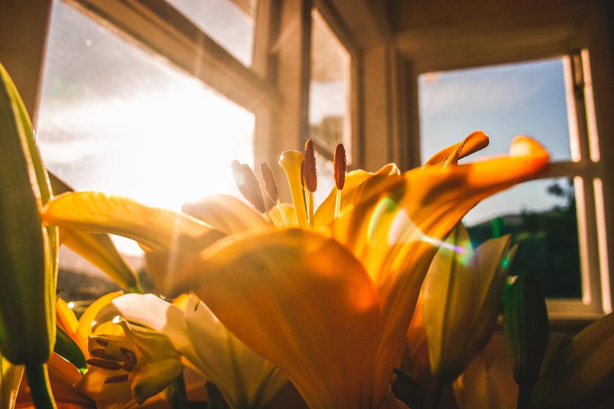 Fleur avec un éclat lumineux