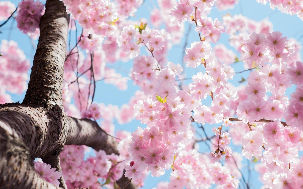 Floreciendo en el árbol