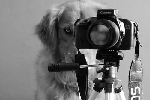 funny-photographers-36_1