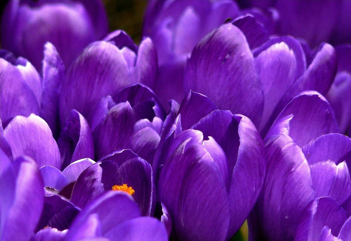 Photos de fleurs chez un fleuriste