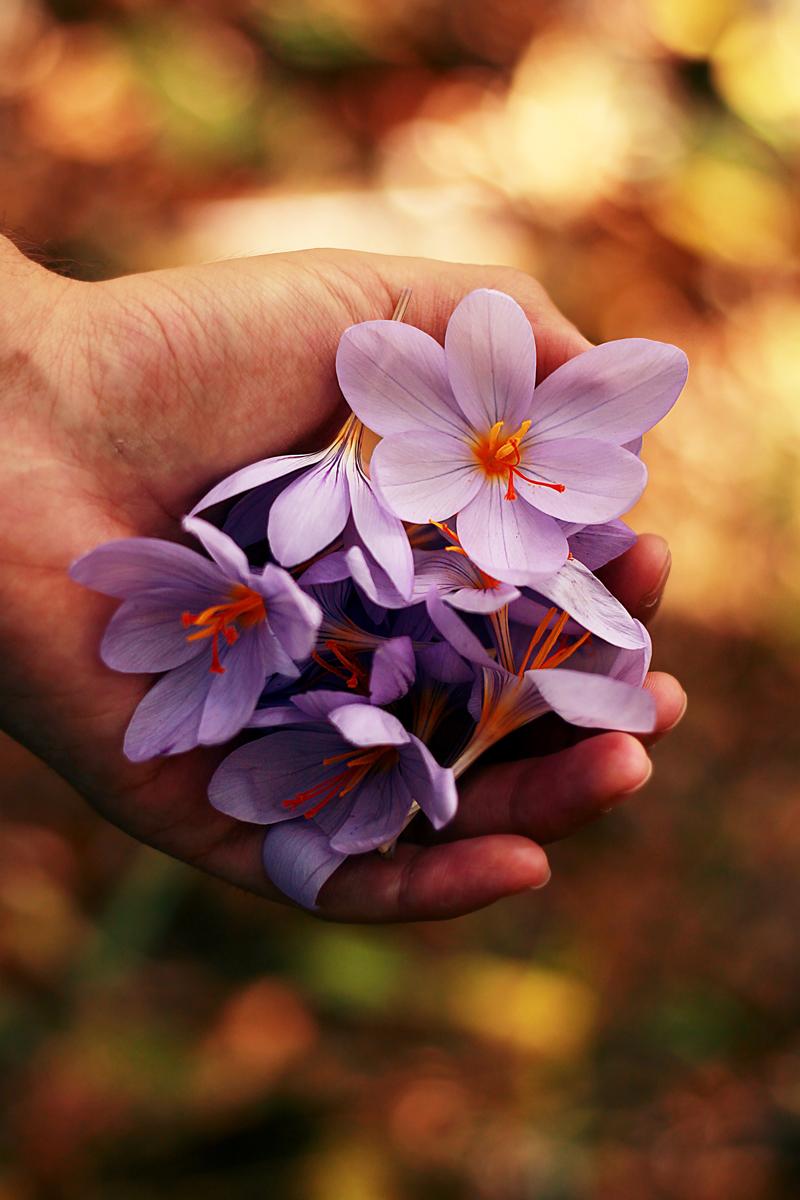 Fotos de flores en las manos
