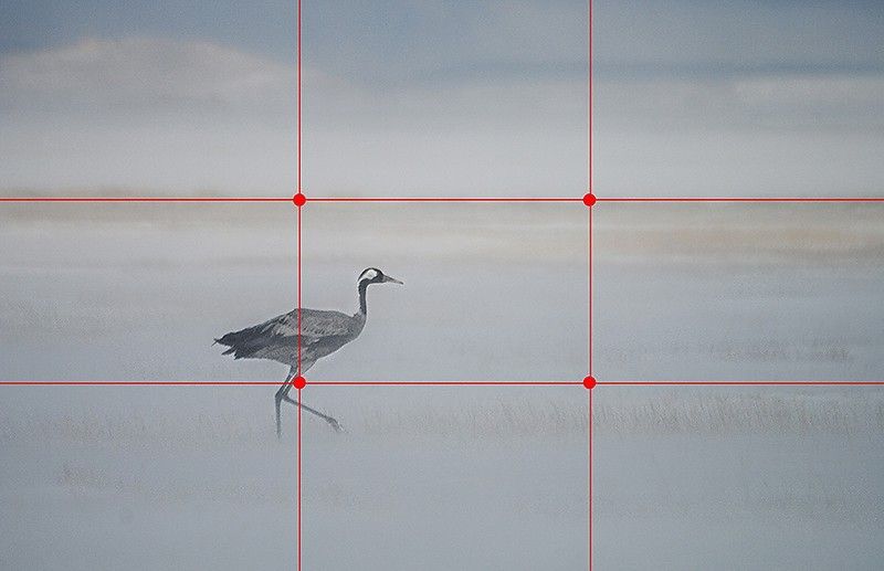 Mejora tus fotos con las 15 reglas básicas de composición