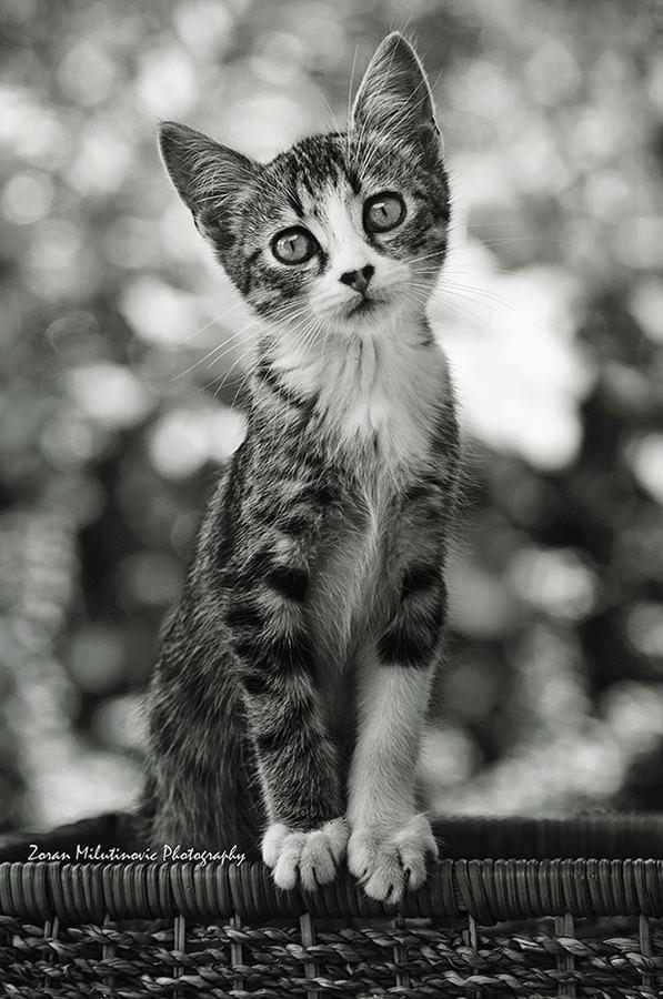 21 consejos para hacer increíbles fotos de gatos