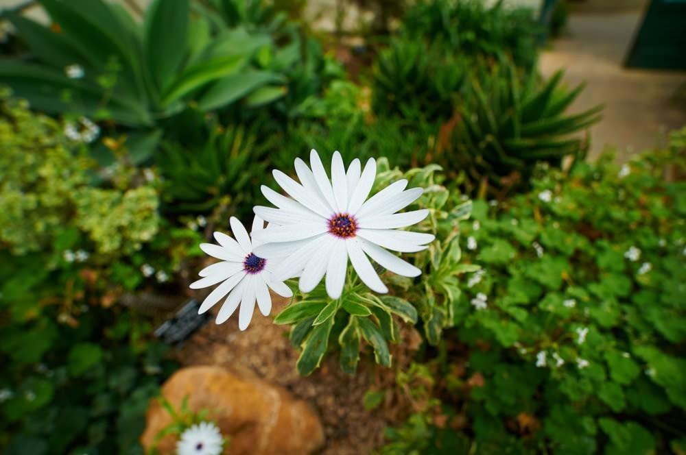 Samyang10mm40199_1400064681_mini