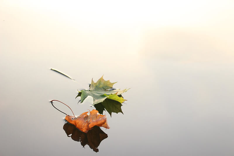 También se puede buscar el otoño en el detalle