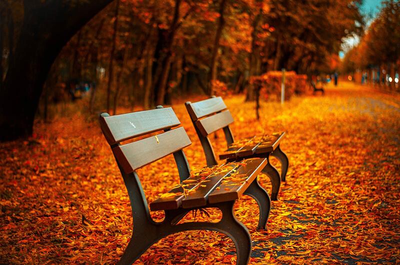 Puedes fotografiar el otoño también en tu ciudad