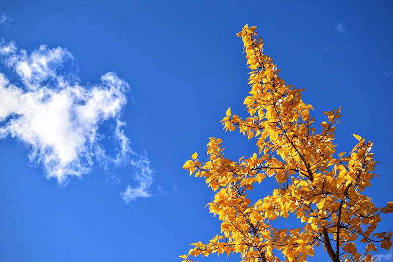 Busca las hojas de tus árboles para inmortalizar el otoño