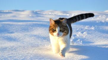 10 consejos para mejorar tus fotografías de invierno