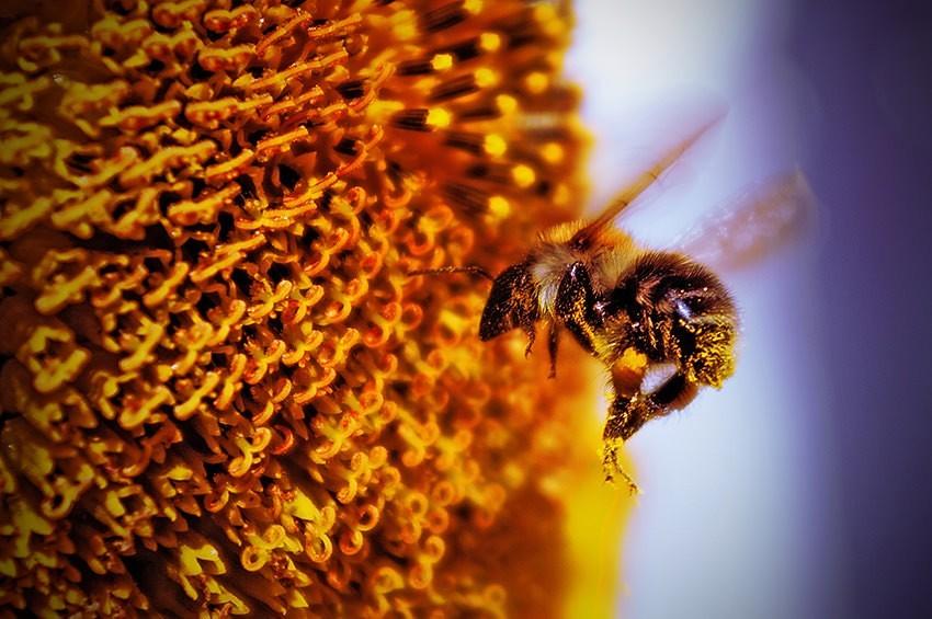 4 claves básicas para iniciarse en la fotografía de insectos