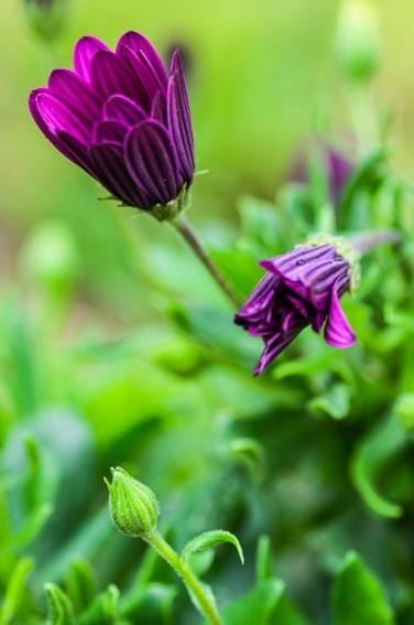 6 trucos esenciales para hacer fotografía de flores como un profesional