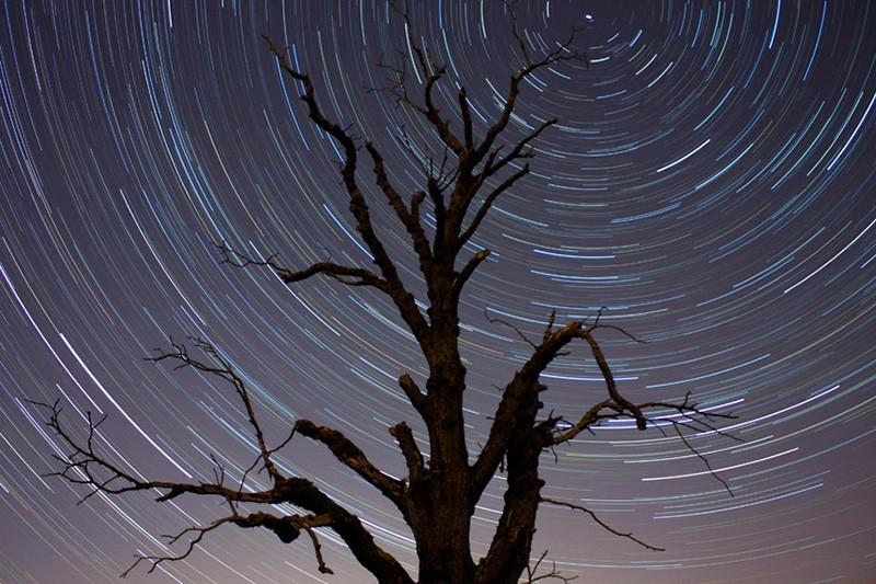 30 increíbles fotos de estrellas en el cielo para inspirarte: Tree and star trails, de Brian Tomlinson