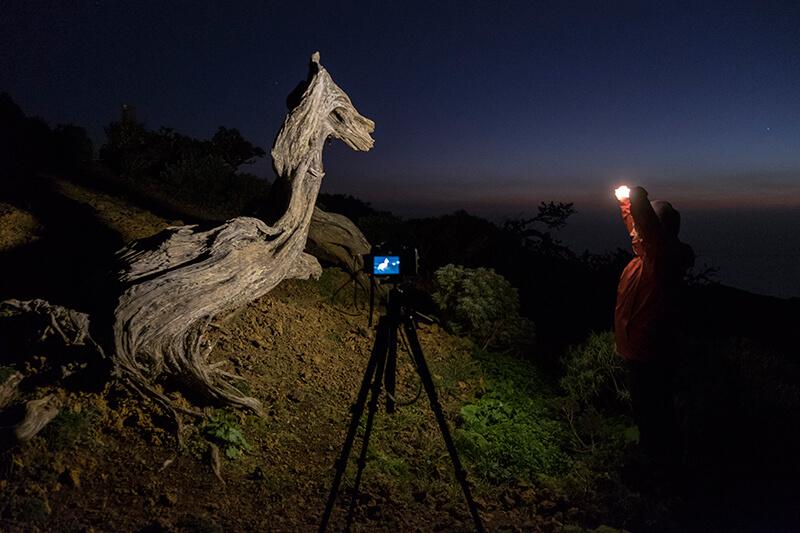 Iluminando una de las míticas Sabina de la isla de El Hierro con la Gloxy Power Blade