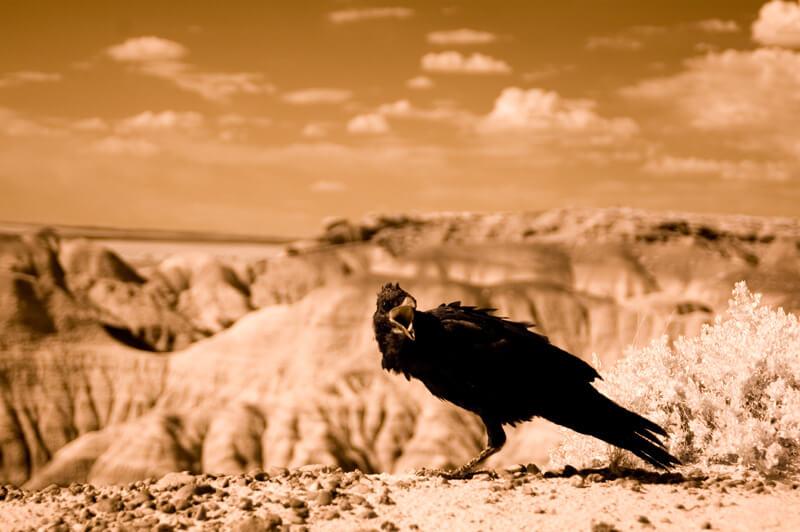 Fotografía infrarroja - Kathleen Murtagh