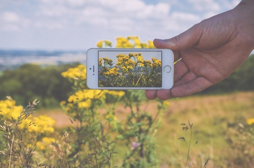 Fotografiando flores con el móvil