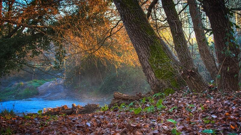 HDR realista: bosque