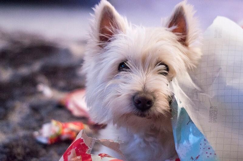 Un perrete disfrutando la Navidad - Tim Watts