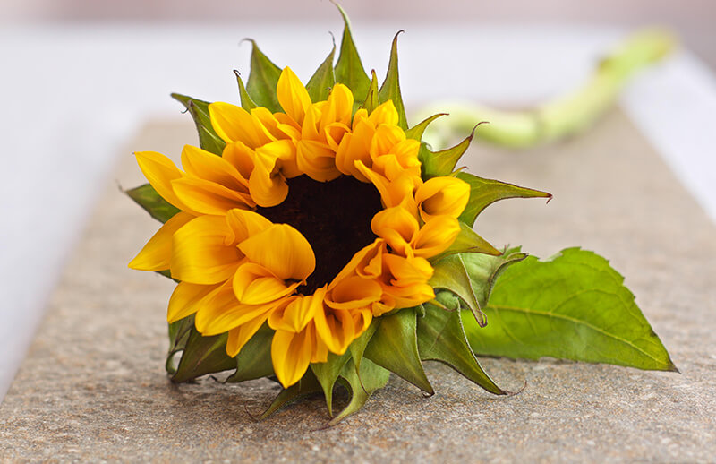 14 ideas originales para hacer fotos en casa: flores