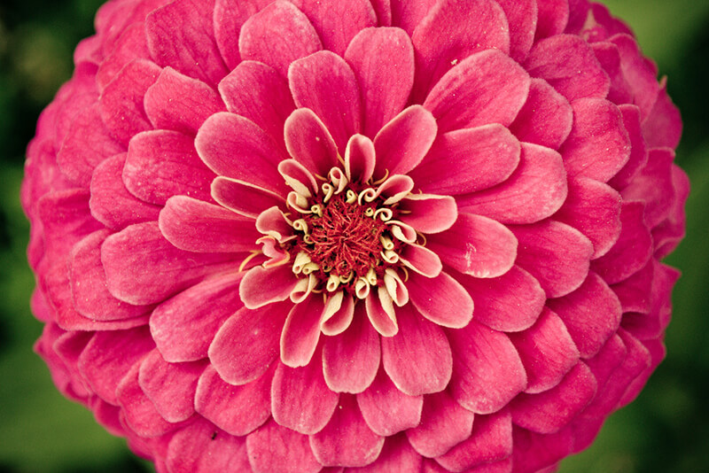 Flower Power. Emilio Küffer