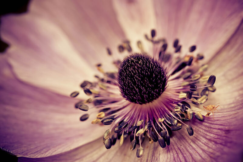 Flor morada. Ilena Gecan