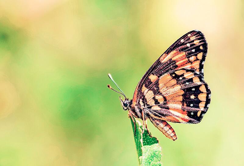 Fotografía macro. Swallowtall Garden Seeds