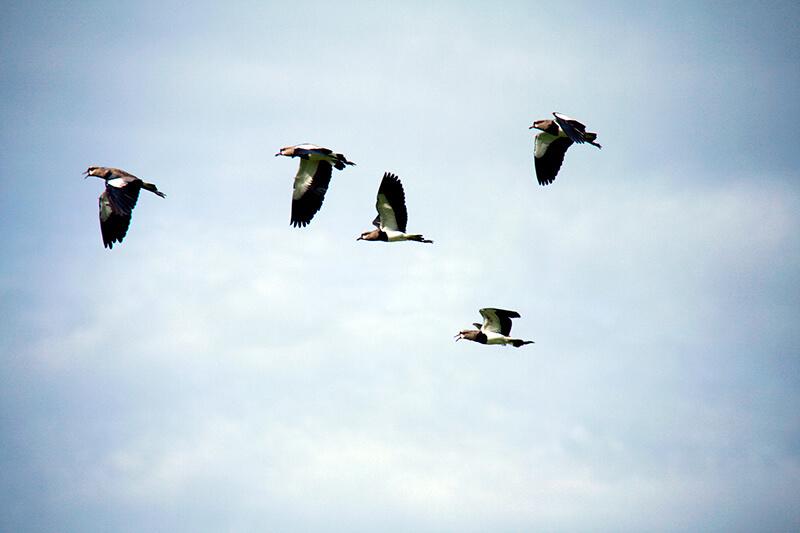 20 consejos útiles para la observación y fotografía de aves. Claire Thibault