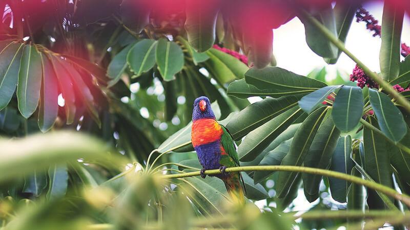 20 consejos útiles para la observación y fotografía de aves. Claude Piche