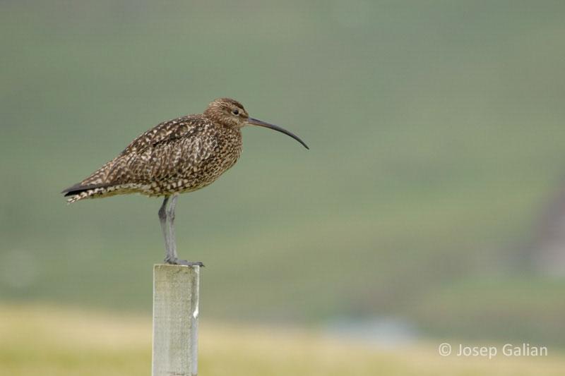 20 consejos útiles para la observación y fotografía de aves. Josep Galian
