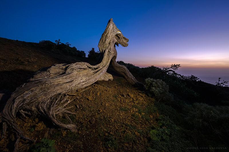 Sabina–Dragón (Isla de El Hierro)