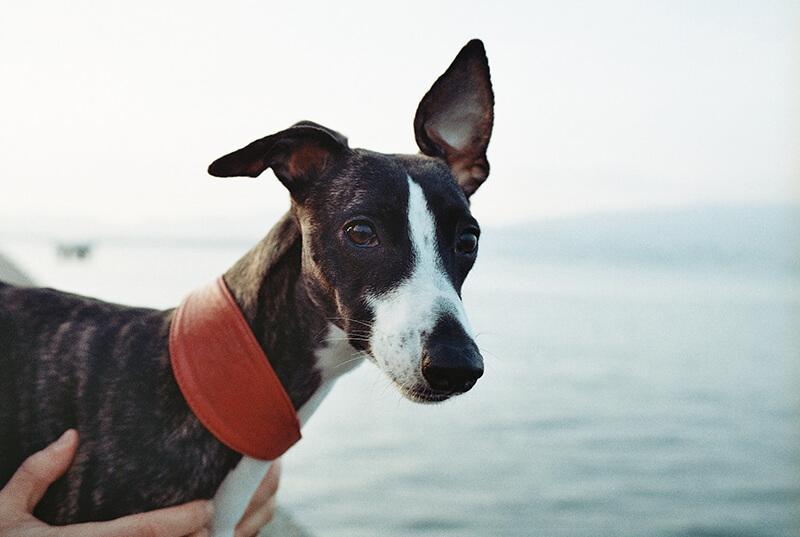 15 consejos prácticos para hacer fotos de mascotas