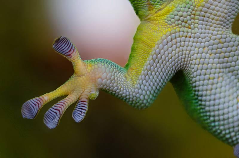 conseguir fotos de reptiles increíbles