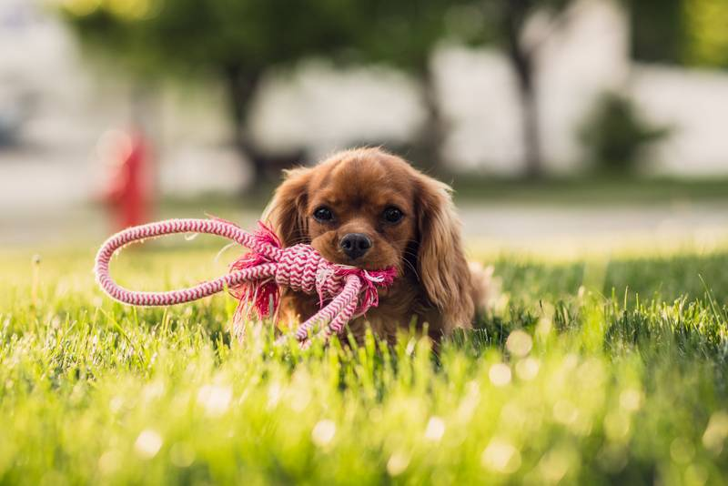 fotos de mascotas panorámicas