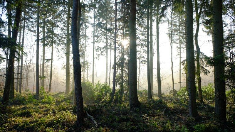 fotografía de naturaleza realizadas con cámara CSC