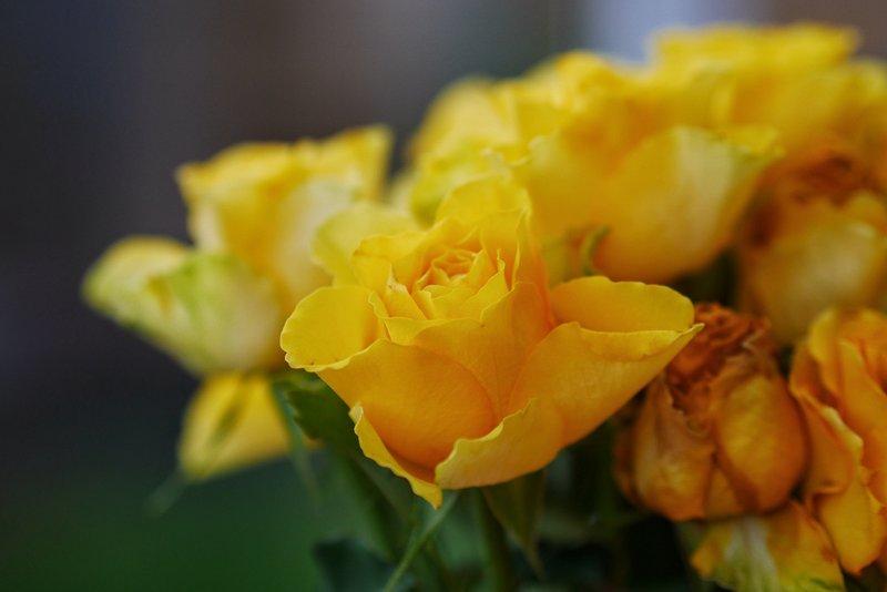 fotografía macro flores hecha con cámara EVIL