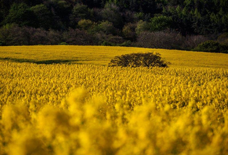 fotografía naturaleza campo con cámara sin espejo