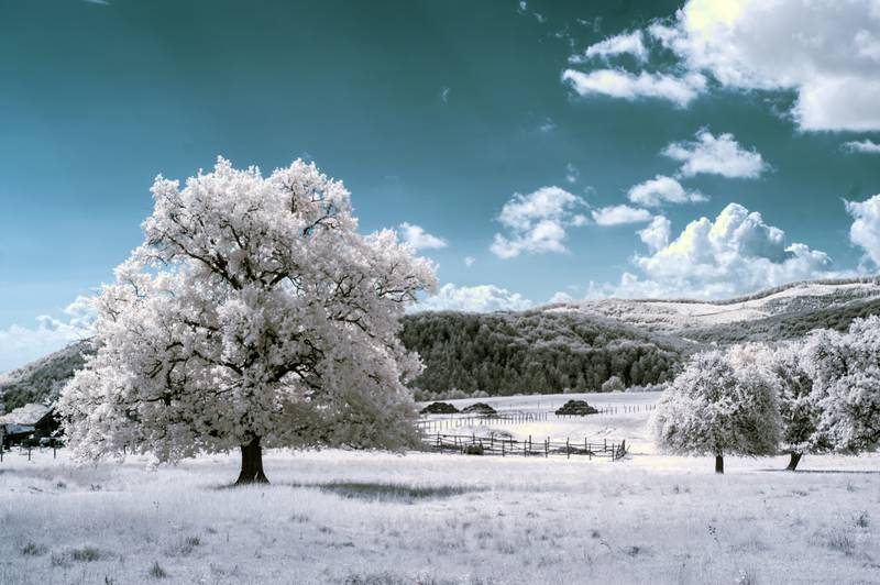 Fotografía infrarroja en la naturaleza