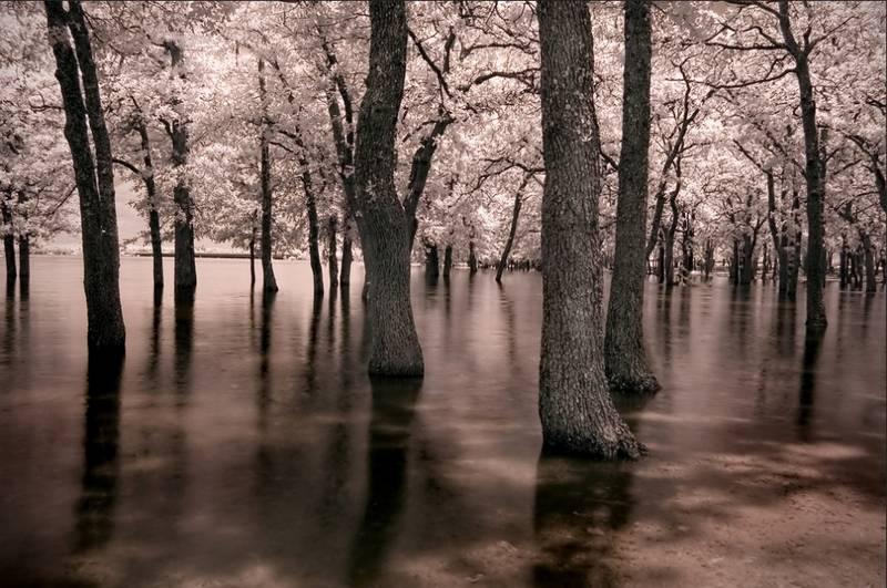 Fotografía infrarroja en el bosque