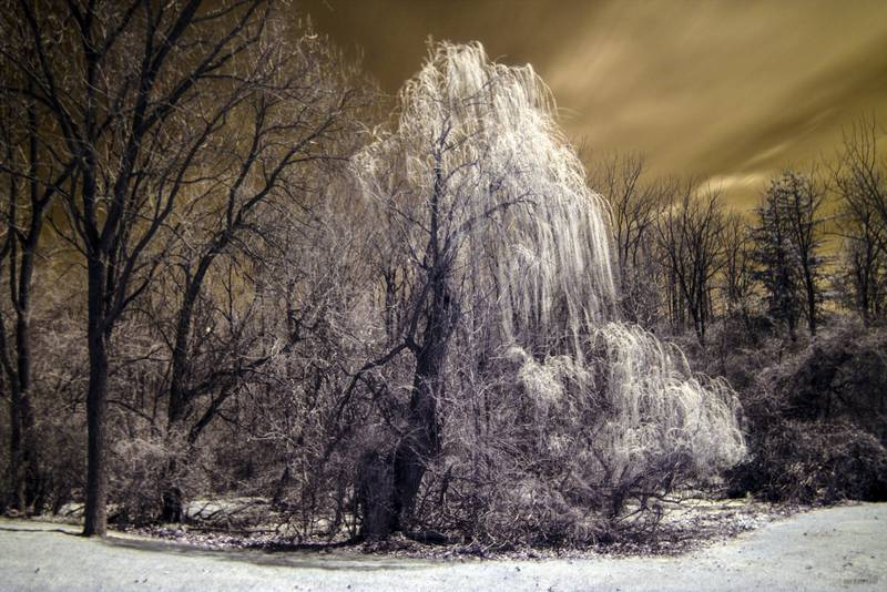 Fotografía infrarroja con filtro IR