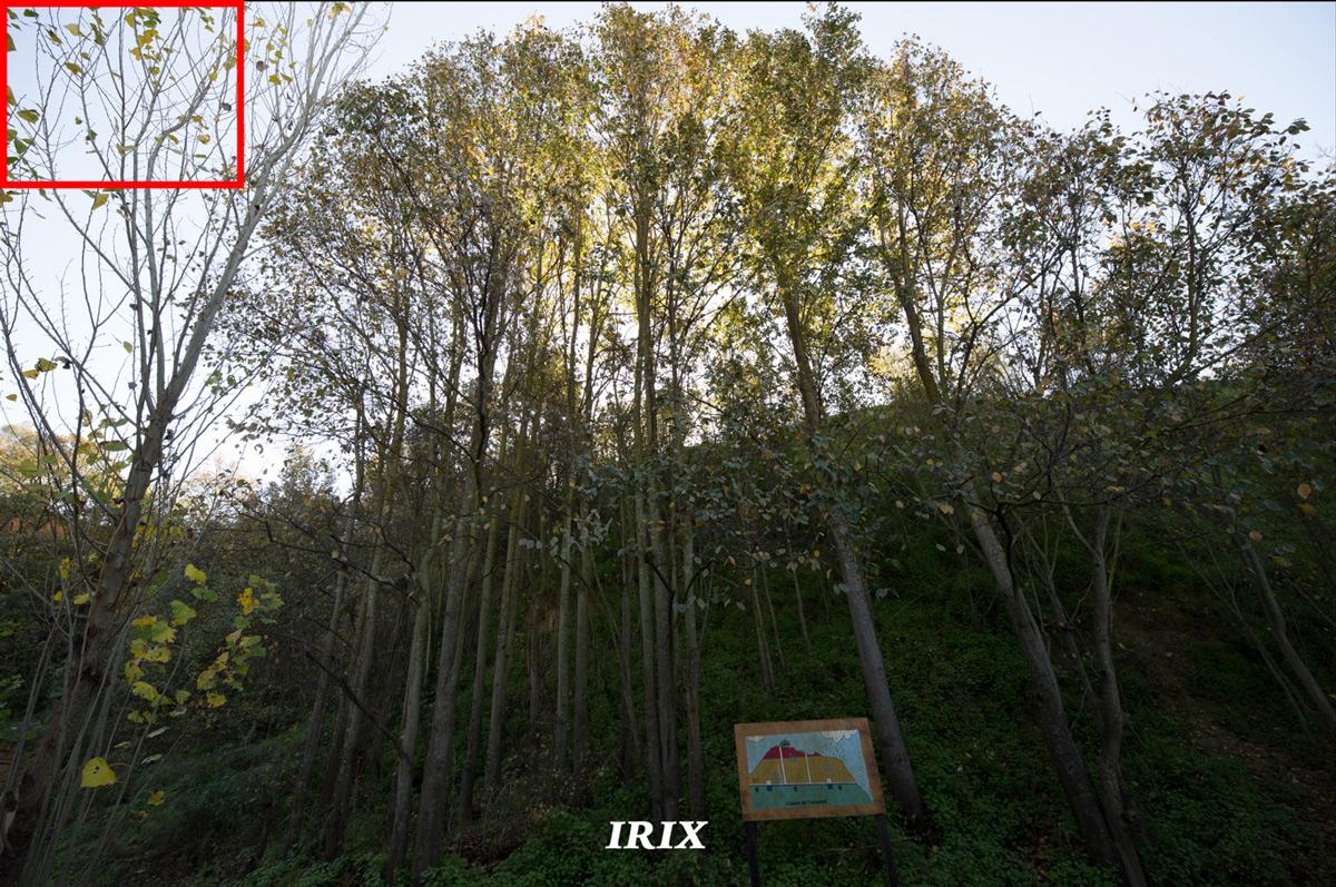 Irix 15mm sin aberraciones cromáticas