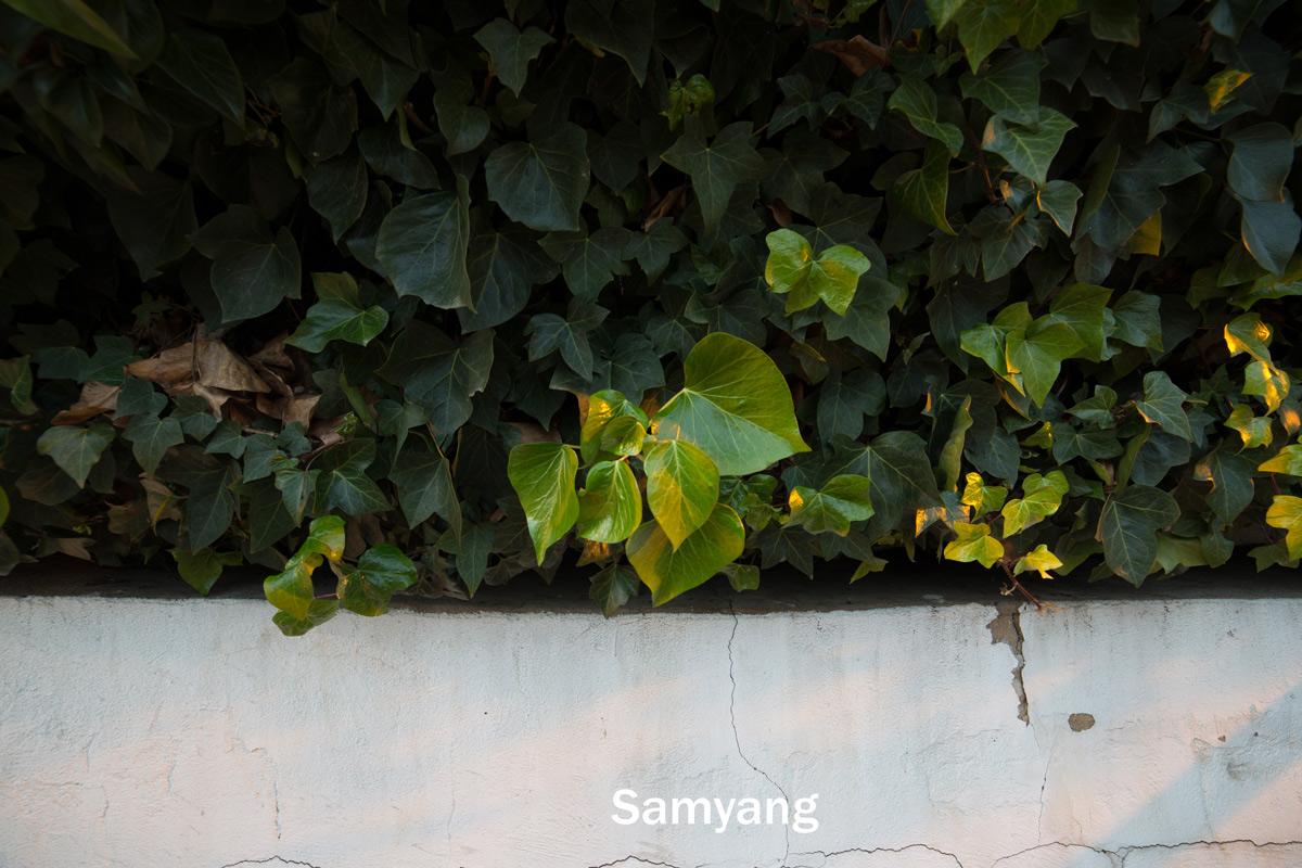 Samyang 14mm and Irix 15mm sharpness